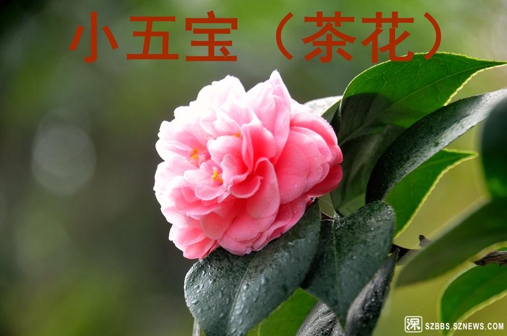 33小五宝_911.jpg