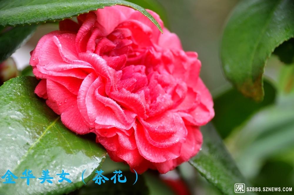 39金华美女_917.jpg