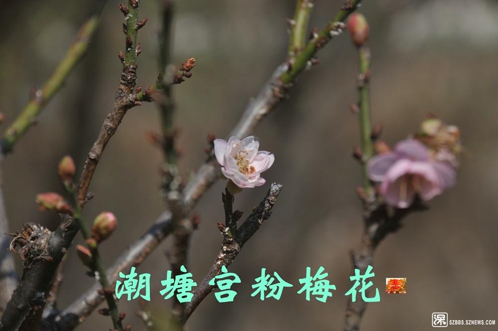庚子梅花_673.jpg