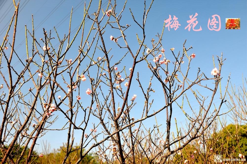 梅园景_679.jpg