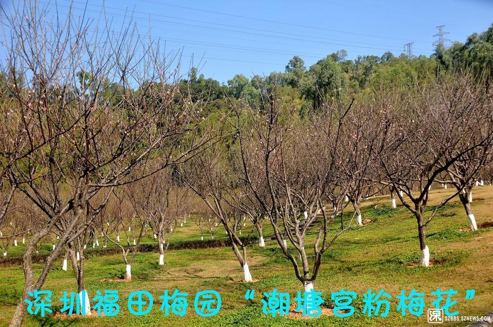 梅园景_688.jpg