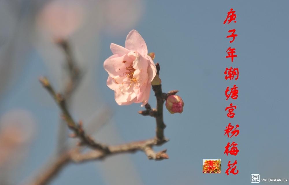 庚子梅花_680.jpg