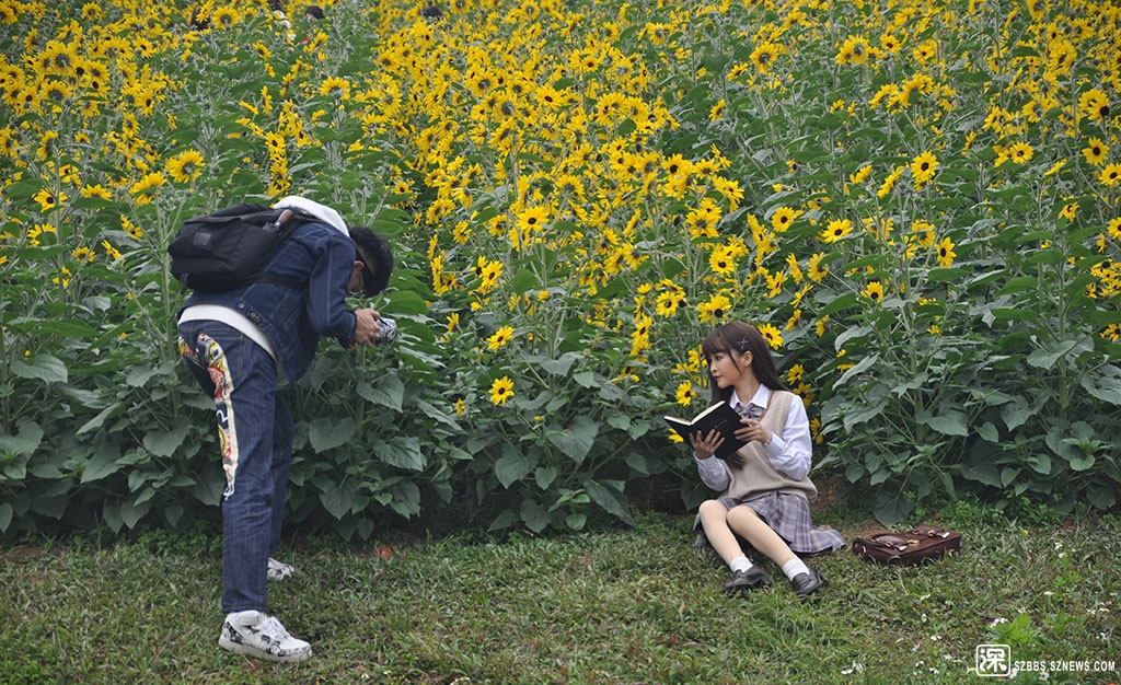 1DSC_3660美女的向日葵艺术照.JPG