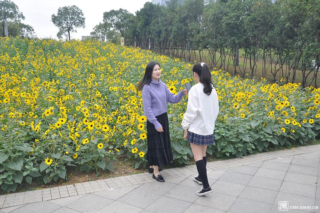 2DSC_3744美女留影向日葵花海.JPG