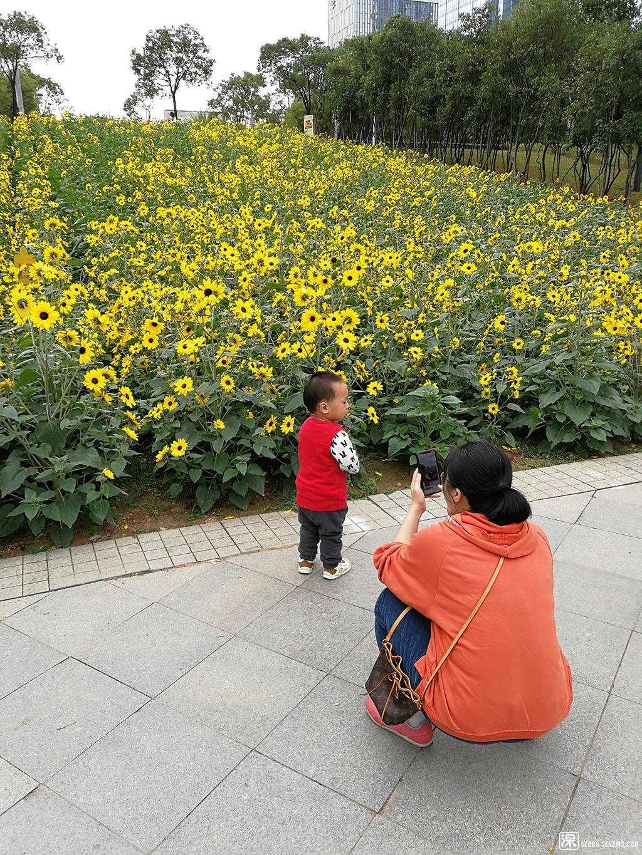 IMG_20200117_104549母子与葵花.jpg