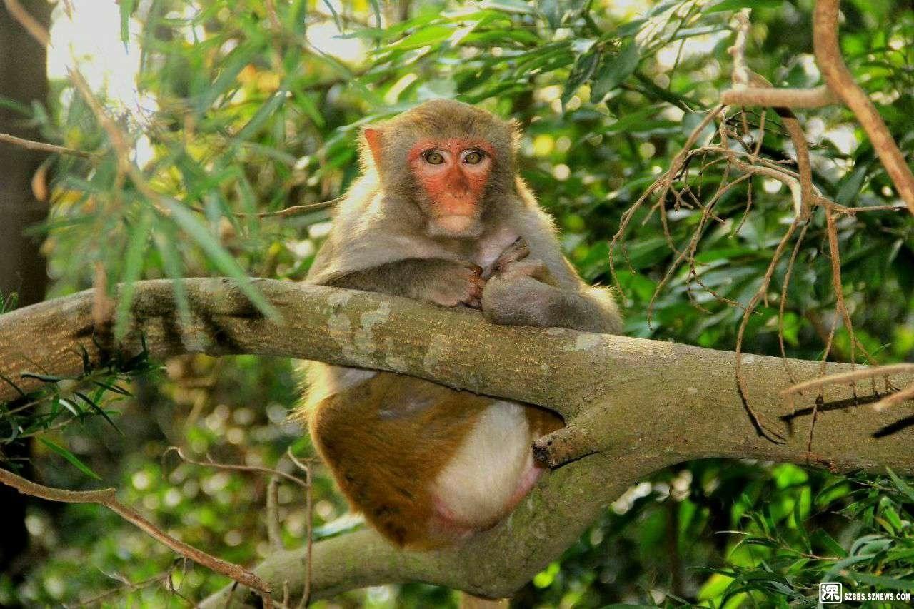 塘朗山公园内发现猴子【suonayila】.jpg