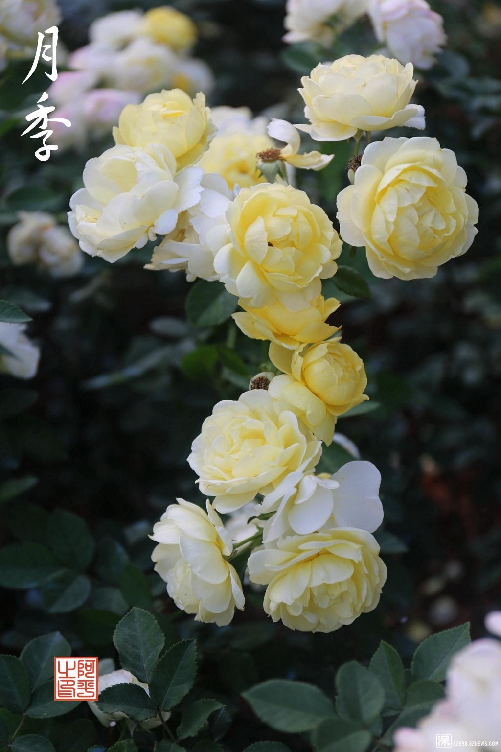 IMG_3409_副本.jpg