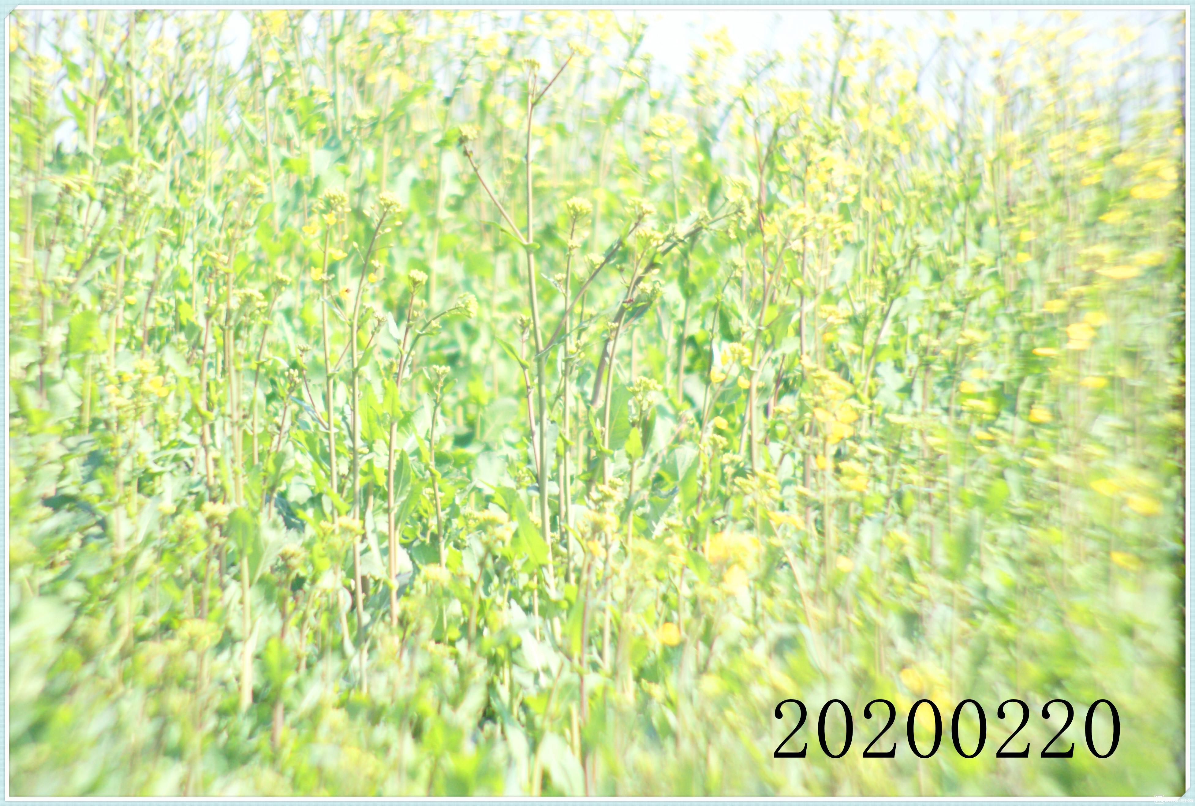 DSC06558.jpg