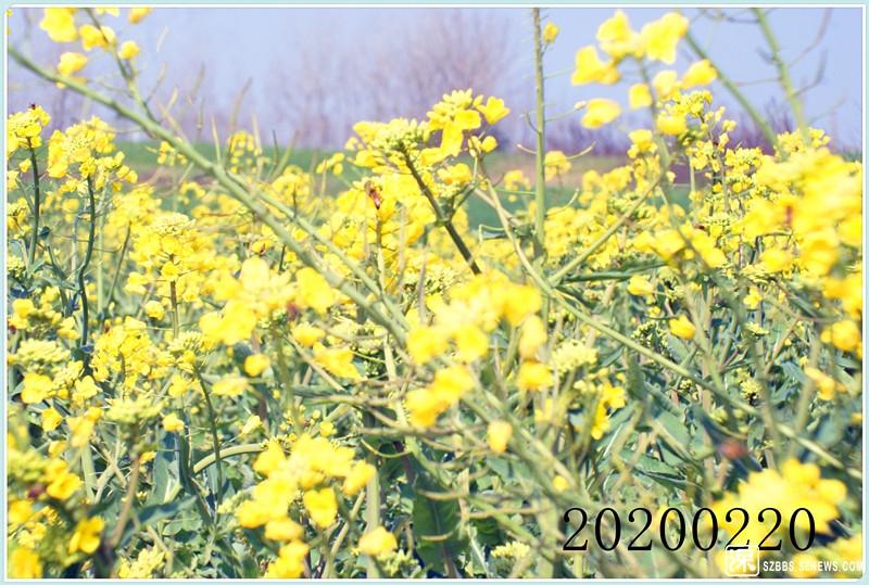 DSC06577.jpg