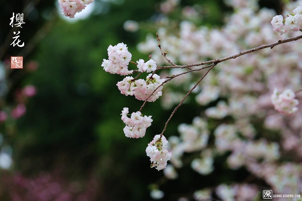 IMG_4639_副本.jpg