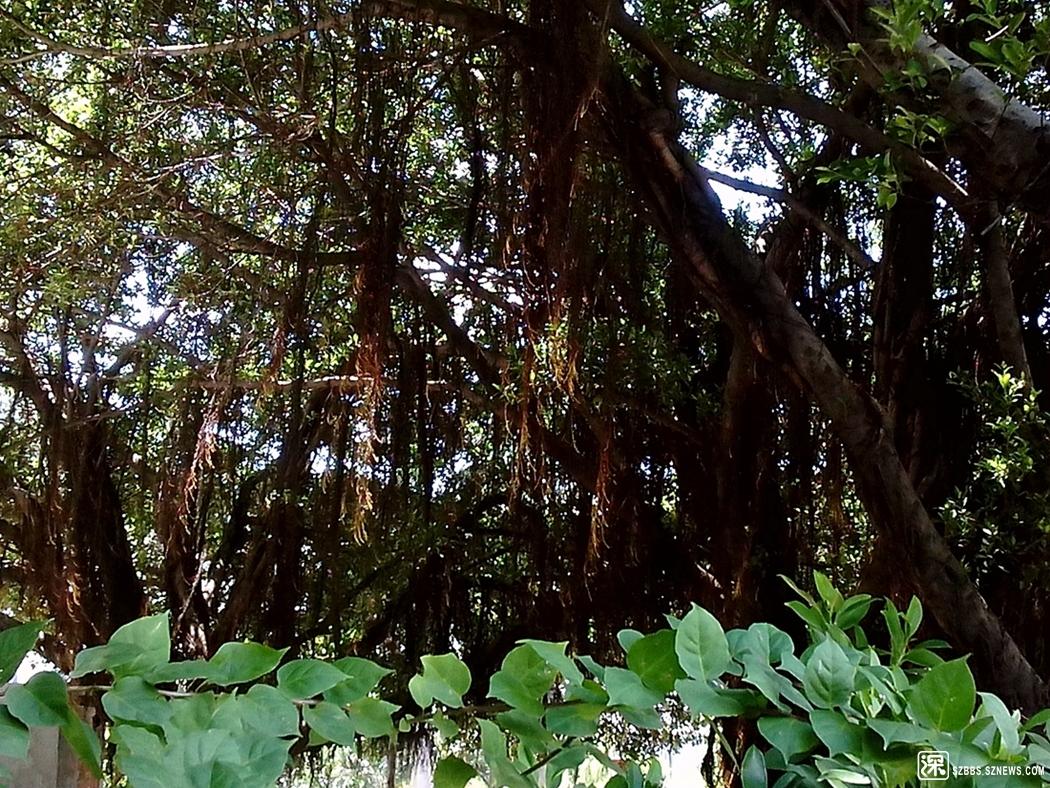 树20120712_1.jpg