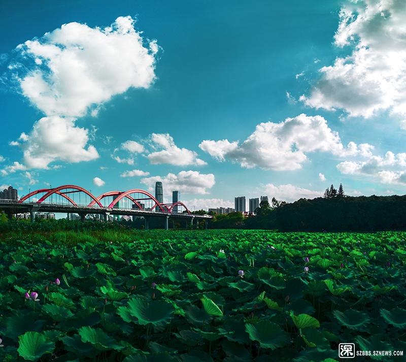 洪湖1.jpg