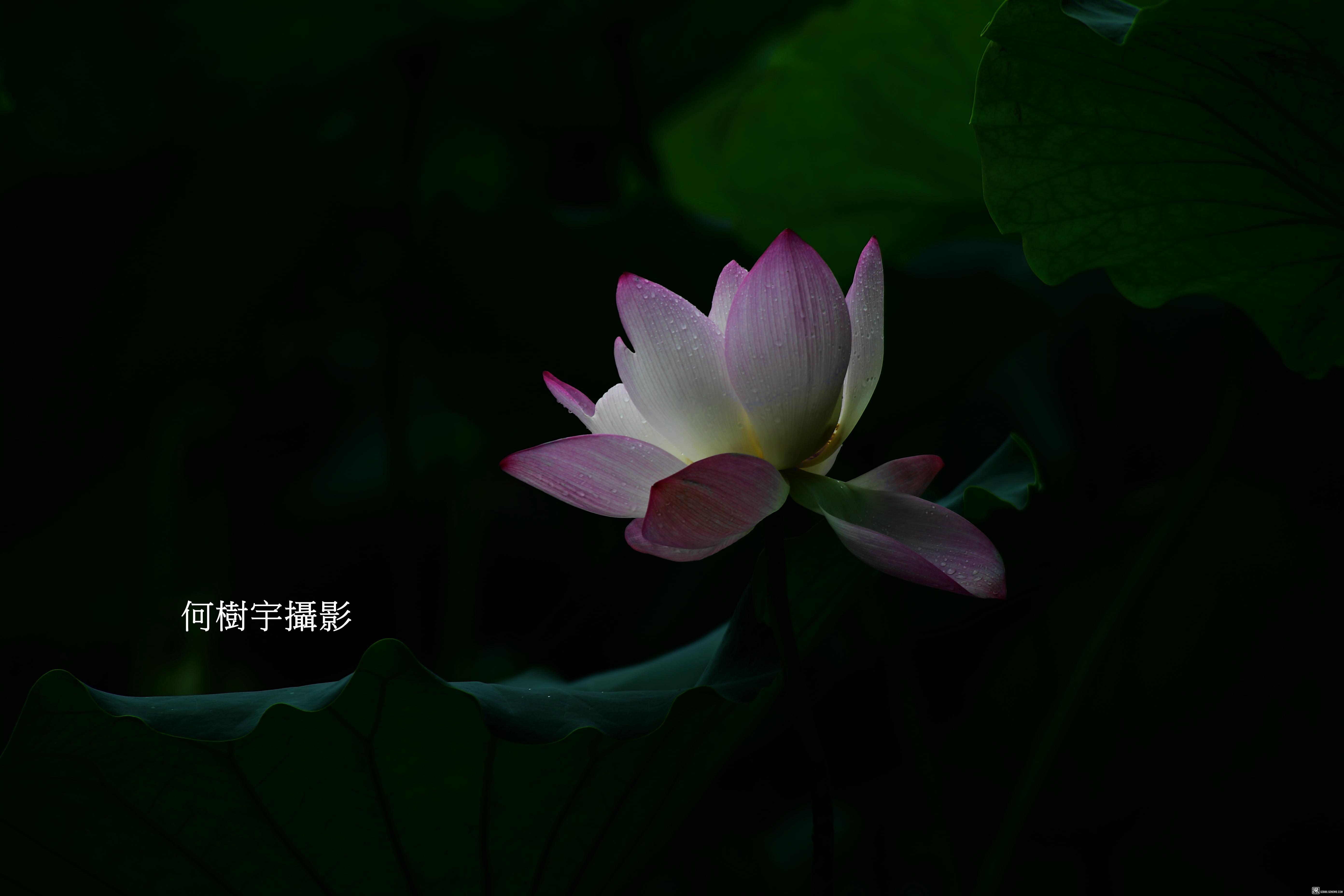 DSC_6850.JPG