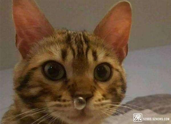 猫咪流鼻子.jpg