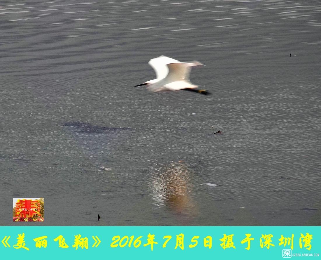美丽飞翔_784.jpg