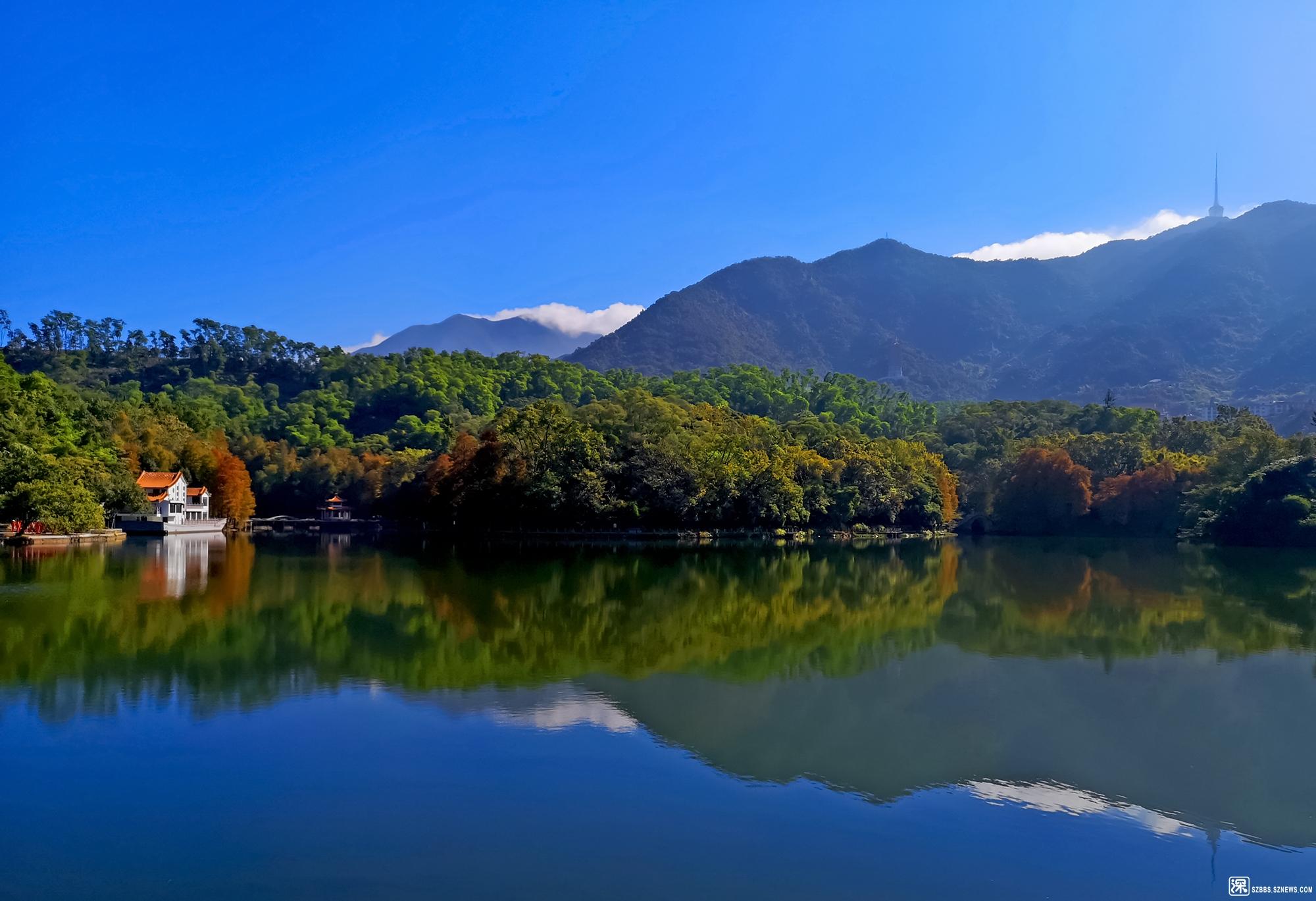 梧桐风景.jp