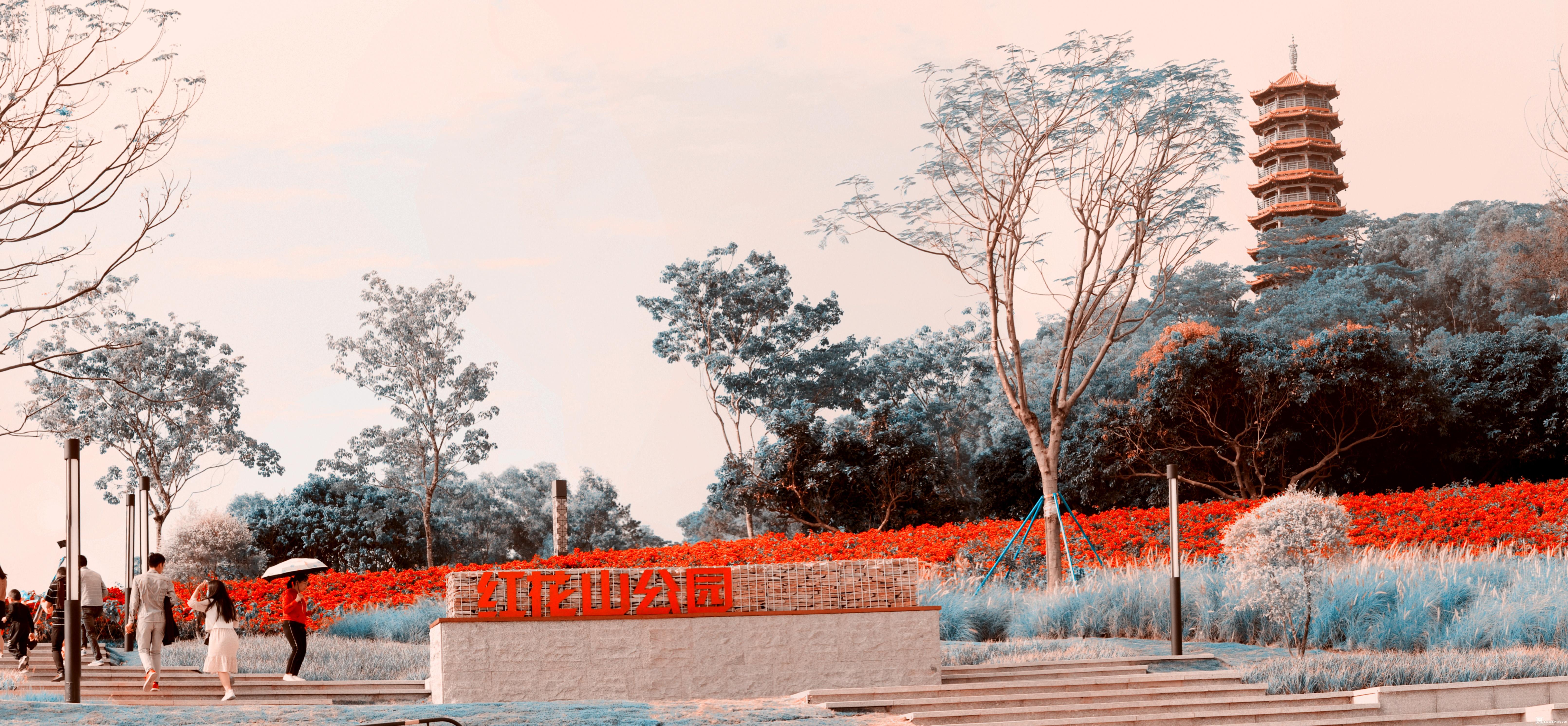 红花山1.jpg