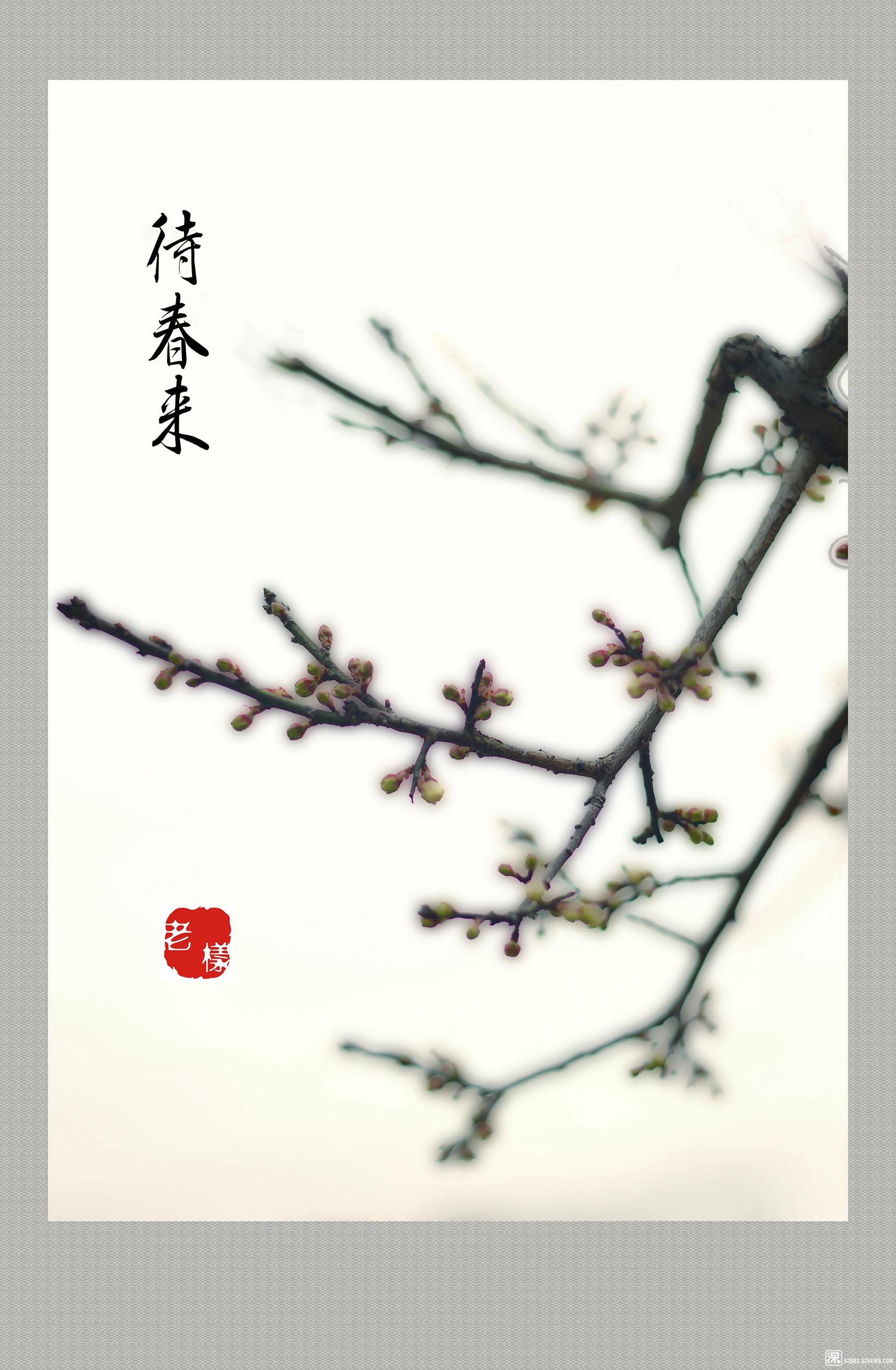 梅花朵朵待春来.jpg
