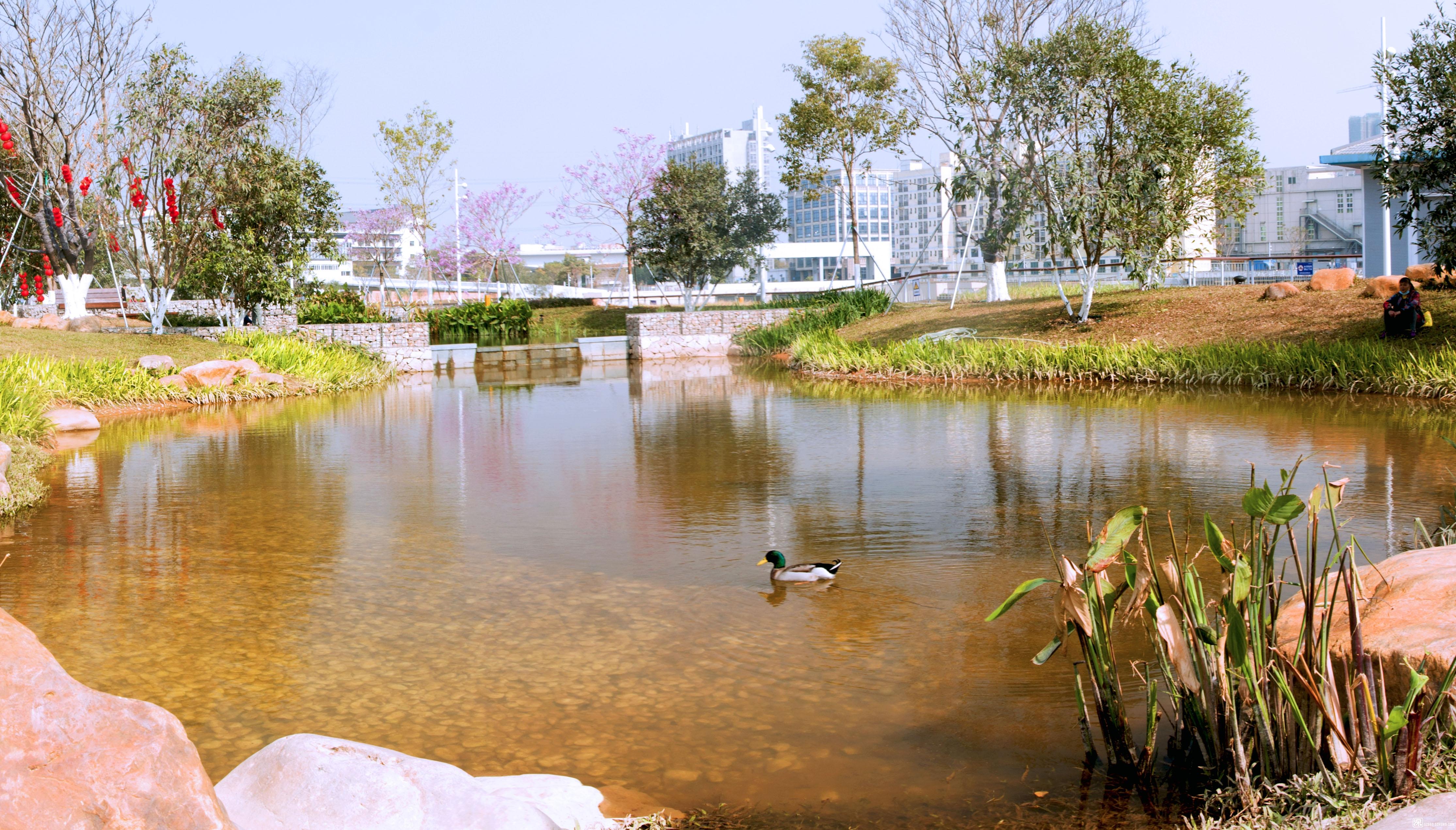 蚝乡湖公园7.jpg