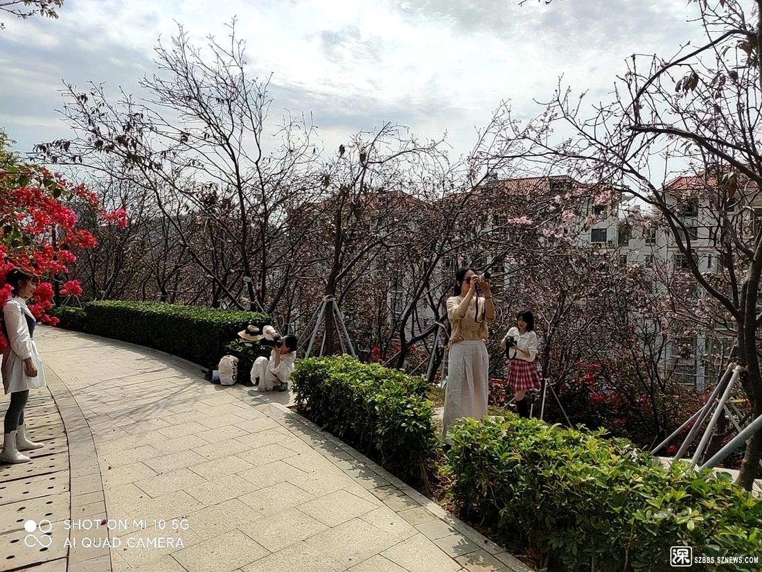 樱花少女20210225_376.jpg