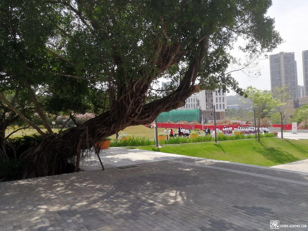 17IMG_20210418_105022来参观的学生经过校园里的古树.jpg